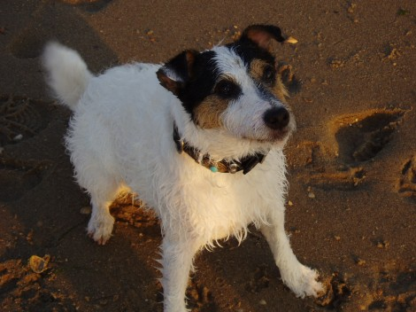 Healey op haar best: strandlook